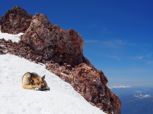 Summit pup!