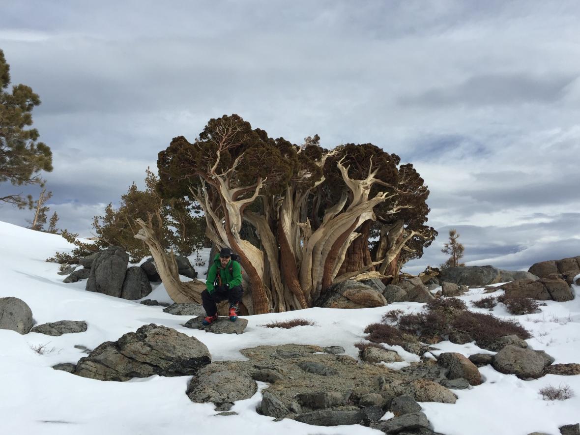 maggies-tree