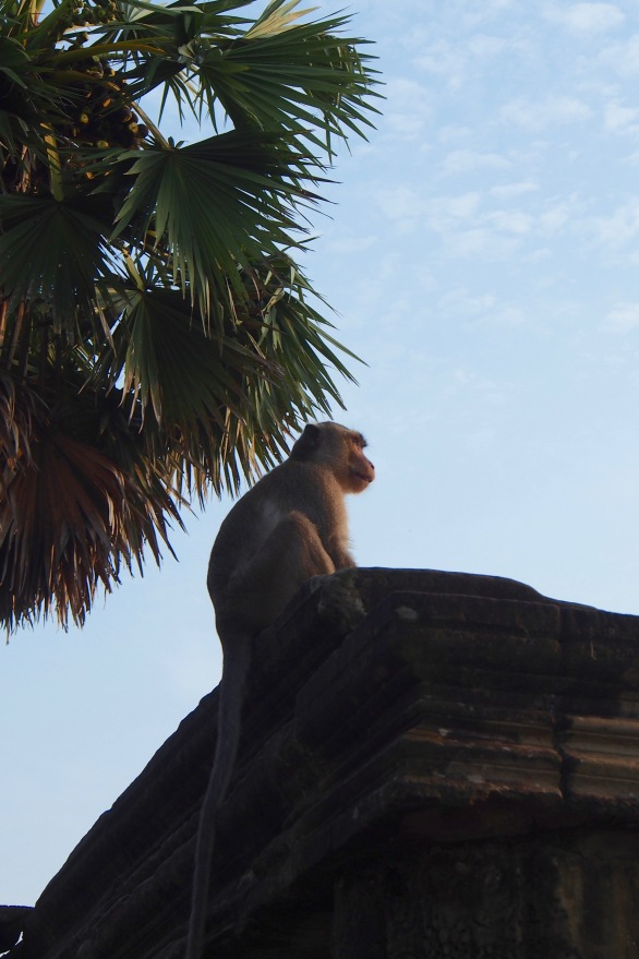 A monkey takes in the Angkor sunrise