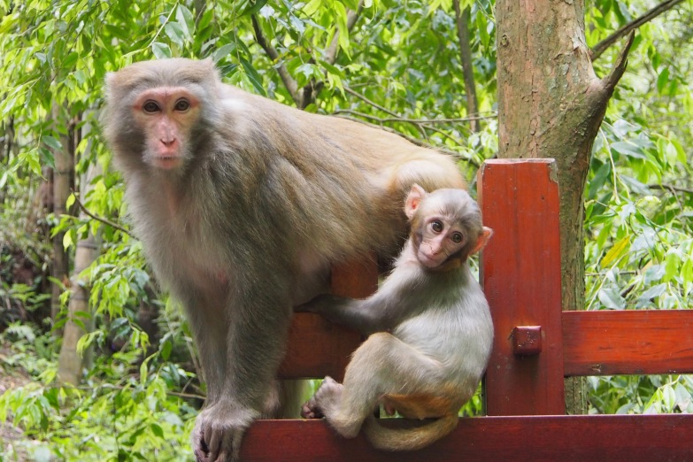 Can't get enough of the wild monkeys in Asia! They're everywhere!