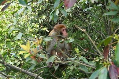 Crouching hiker, hidden monkey.