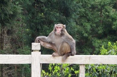 Monkey yoga!