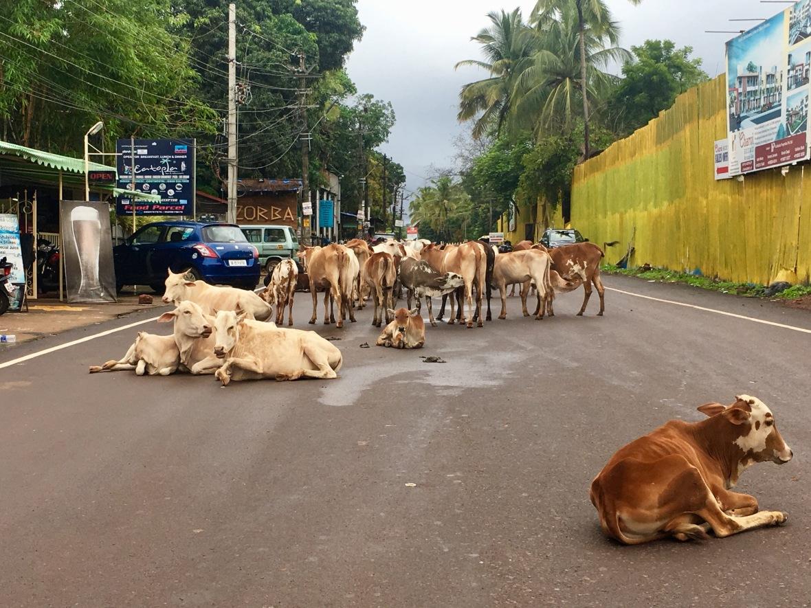 Goa traffic jam