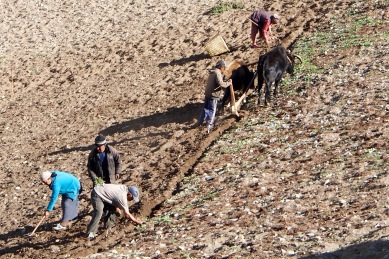 Agriculture abounds