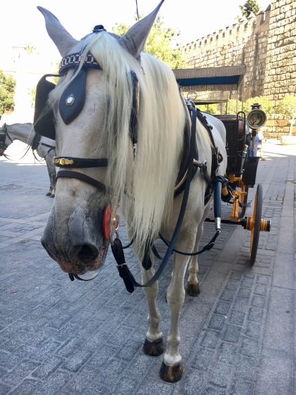 Especially in Southern Spain, horses are celebrated as part of the culture. In Seville, beautiful Andalusian horses are ready to take you all around town!