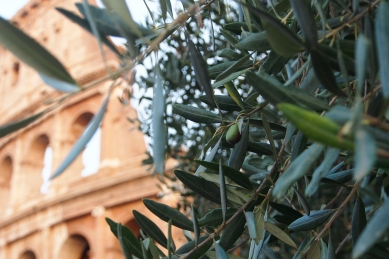 Mmmmm olives